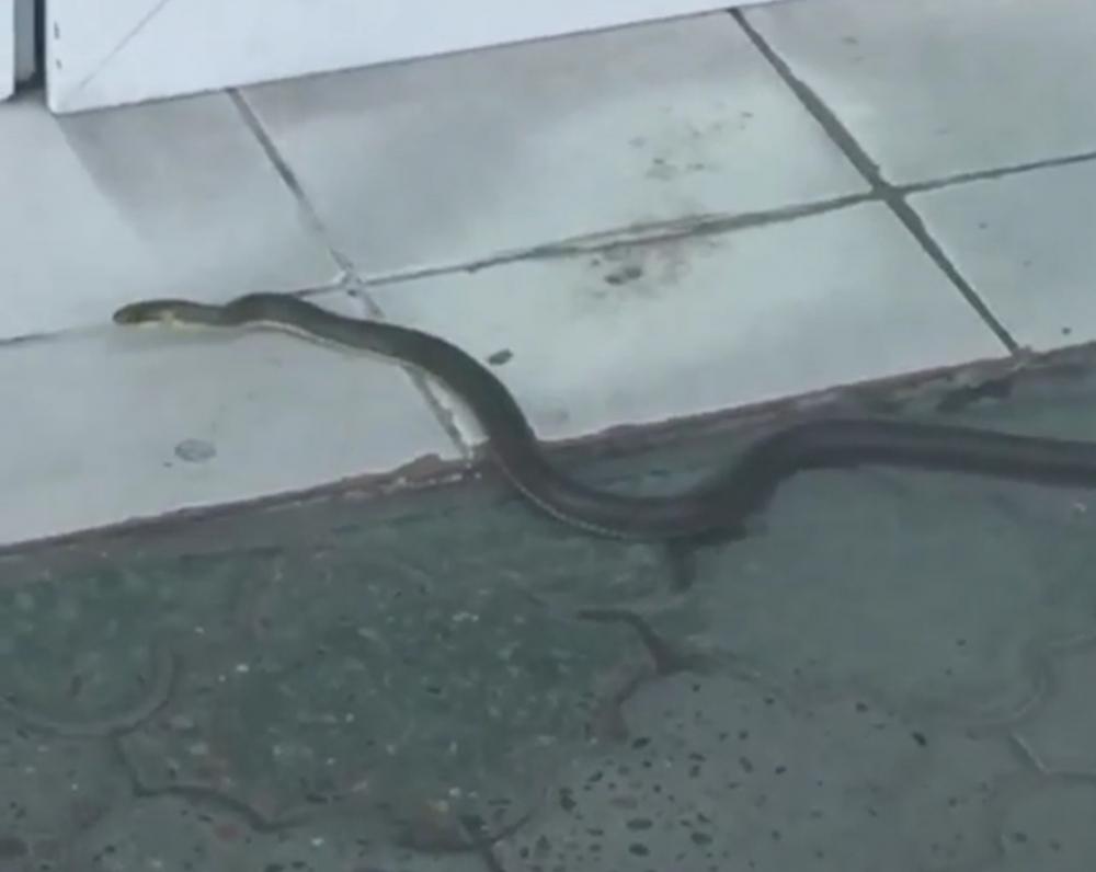 В Новороссийске посетительница магазина оказалась змеёй