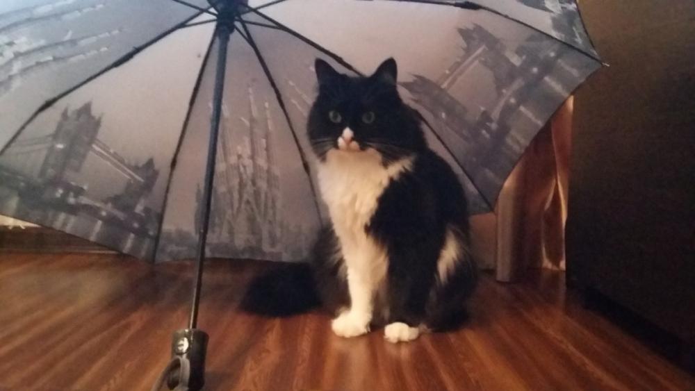 Новороссийцам лучше прихватить с собой зонт: вечером ожидается дождь