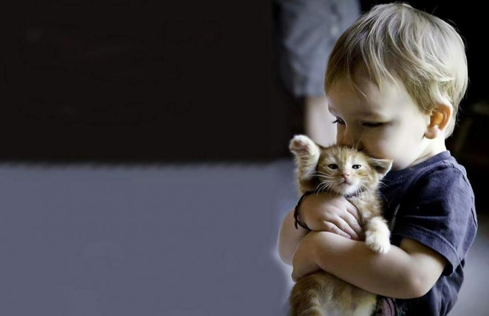 «Поднял котенка- стал жертвой». Новороссийцы получают страшные сообщения в чатах месседжеров