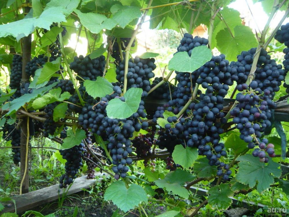 Никто не хотел покупать: продажа виноградников Мысхако не состоялась