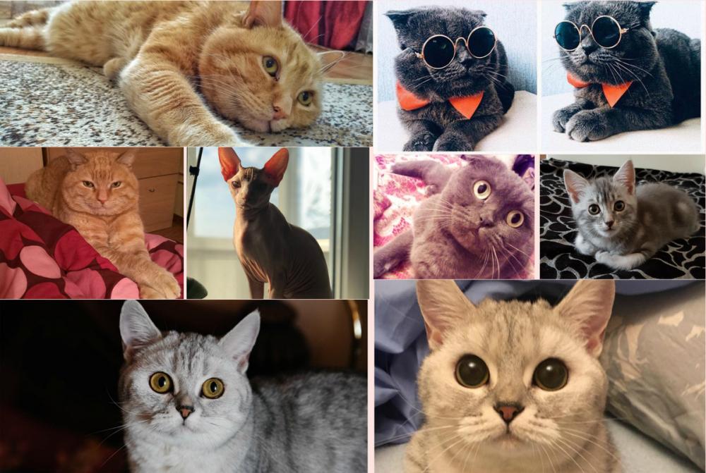В конкурсе участвуют самые красивые коты Новороссийска