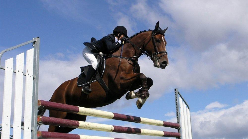 Вернулась с золотом по конному спорту жительница Новороссийска