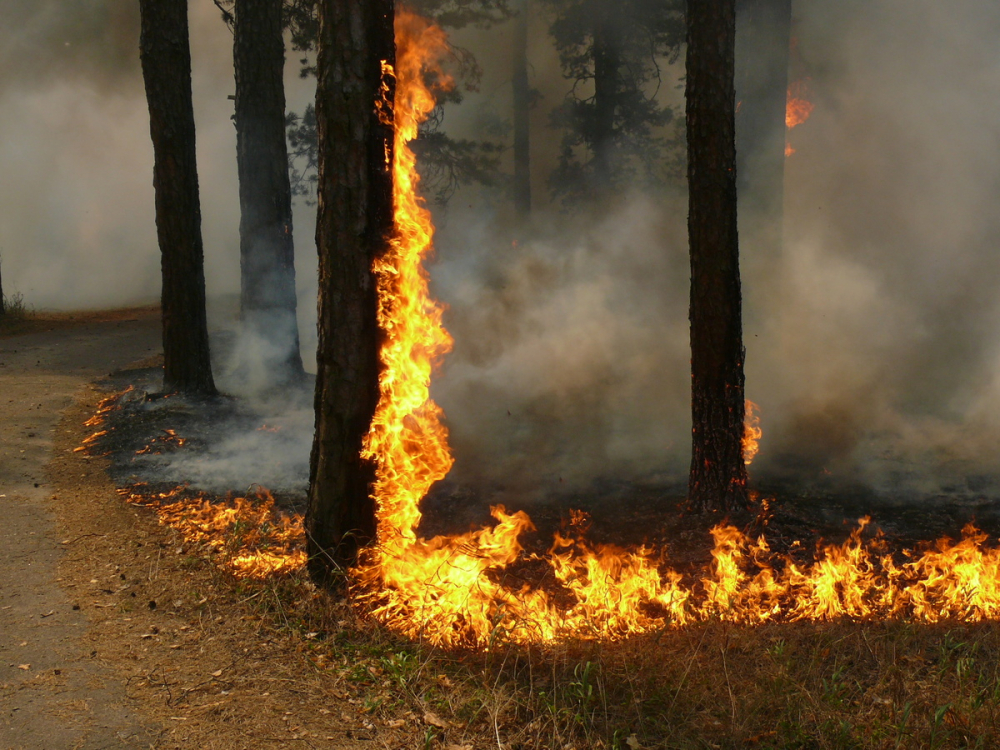 Чрезвычайная пожароопасность объявлена на Кубани