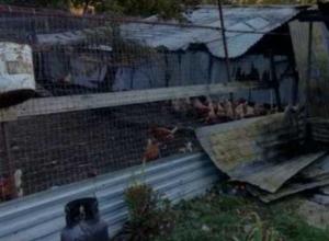 За два часа поджарились 3000 перепелок и 500 кур под Новороссийском