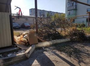 Сухие ветки обрезали, а вывезти забыли в Новороссийске