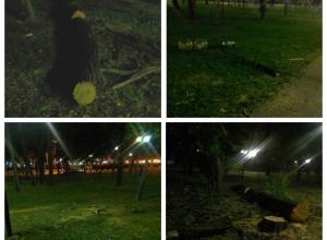 Кто и зачем вырубает деревья на Площади Героев Новороссийска