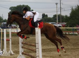 Новые разряды по конкуру получили новороссийские спортсмены