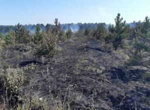 Молодой лес горел в Новороссийске