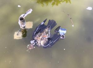 Мертвая птица уже три дня плавает в фонтане Новороссийска