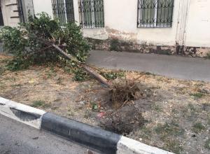 Подотчетное дерево уже несколько дней лежит корнями вверх в  центре Новороссйска