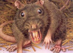В Новороссийске сняли, как здоровенные крысы играют рядом с детьми