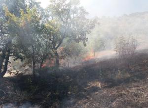 Крупный лесной пожар ликвидировали в Новороссийске