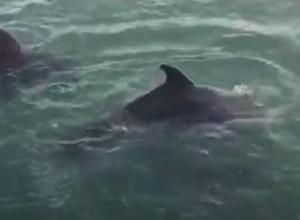 В сети появилось видео с дельфинами, позирующими в Новороссийском порту