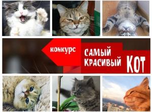 Завершен прием заявок в конкурсе «Самый красивый кот - 2018»