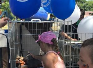 Семь животинок нашли себе дом: видео-репортаж с выставки бездомных животных в Новороссийске