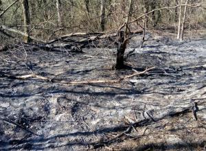 Уникальные подробности пожара в Цемесской роще Новороссийска
