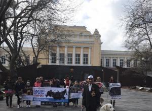 Готова вторая часть видеообращения к президенту в защиту животных, снятая в Новороссийске