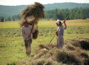 Число сельских жителей выросло в Новороссийске