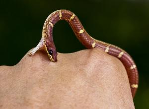 Почему в этот солнечный день нельзя допустить укуса змеи