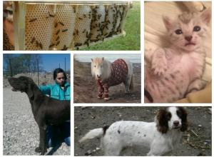 Топ-5 самых дорогих домашних животных с avito в Новороссийске