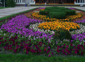 Зеленые пятна Новороссийска вырастут в полтора раза