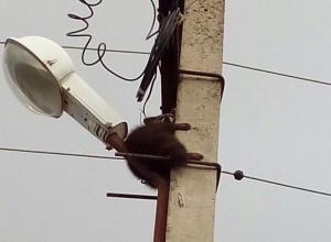Городские службы Новороссийска отказываются спасать енота