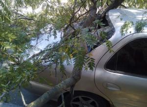 Уставшее дерево пробило стекло автомобиля в Новороссийске