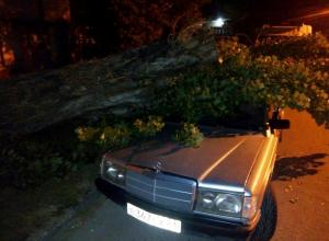 Старое дерево упало на припаркованный у дома автомобиль в Новороссийске