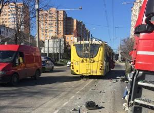 Рогатые стали причиной двух ДТП в Новороссийске