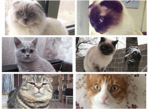 Стали известны победители конкурса «Самый красивый кот - 2018»