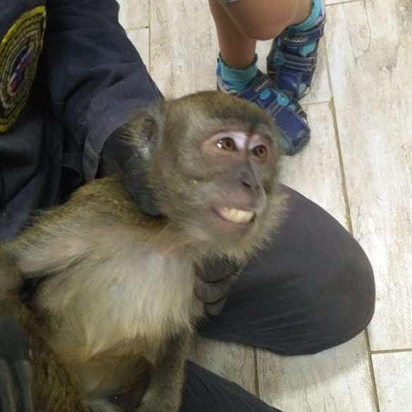 Спасатели Новороссийска поймали очередную сбежавшую обезьяну