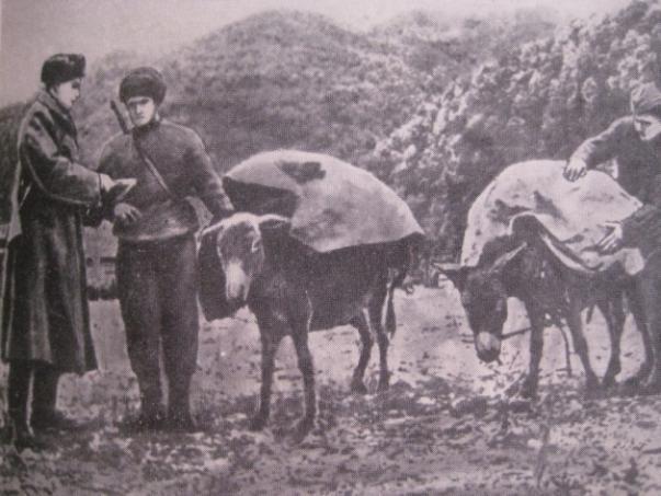 Новороссийск 75 лет назад: роль ослов на Малой земле