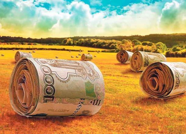 Прокуратура в Новороссийске забрала у крестьянских хозяйств лишние субсидии