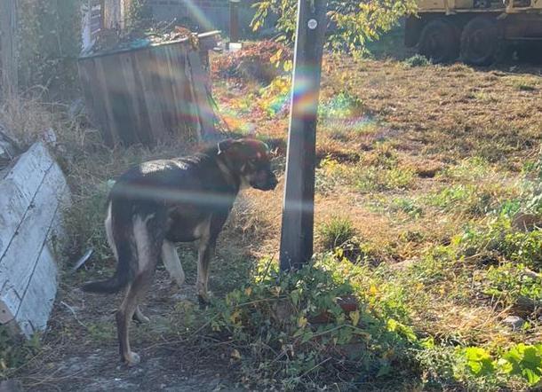 Брошенный хозяином голодный пёс напал на семилетнюю девочку из Новороссийска