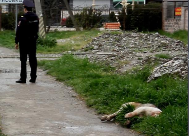 Трагедия с ребенком вызвала жаркие споры у новороссийцев