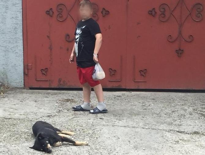 В Новороссийске профессионально отстреливают собак ядом на виду у всех