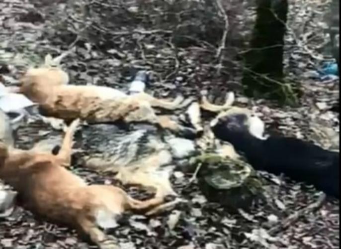 Целое кладбище мертвых собак нашли волонтеры под Новороссийском