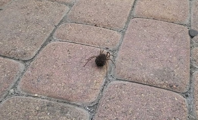 Огромного паука обнаружил местный житель в Новороссийске