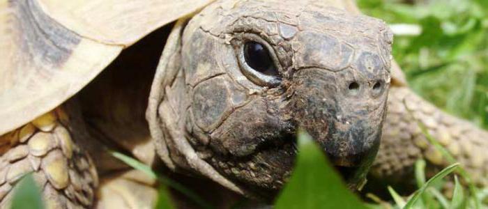 Суд Новороссийска остановил продажу филина, утки, черепахи, тритона и другой экзотики