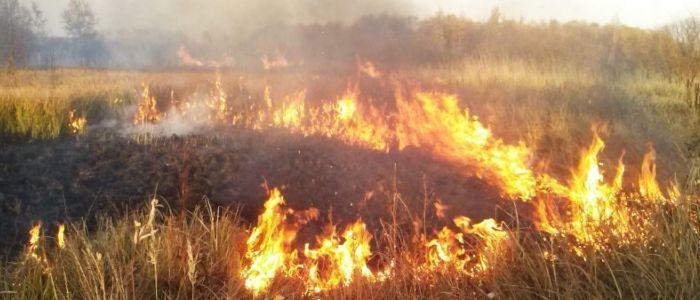 Прямо сейчас под Новороссийском тушат крупный пожар