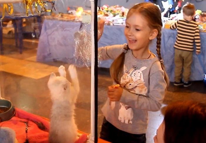 В Новороссийске прошла Международная выставка кошек