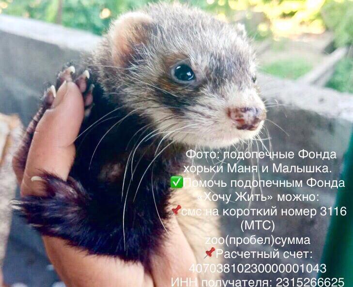 Хорьков в клетке подобрали с улицы Новороссийска, и они ищут дом