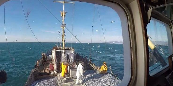 В Новороссийске снова возродится рыбная промышленность