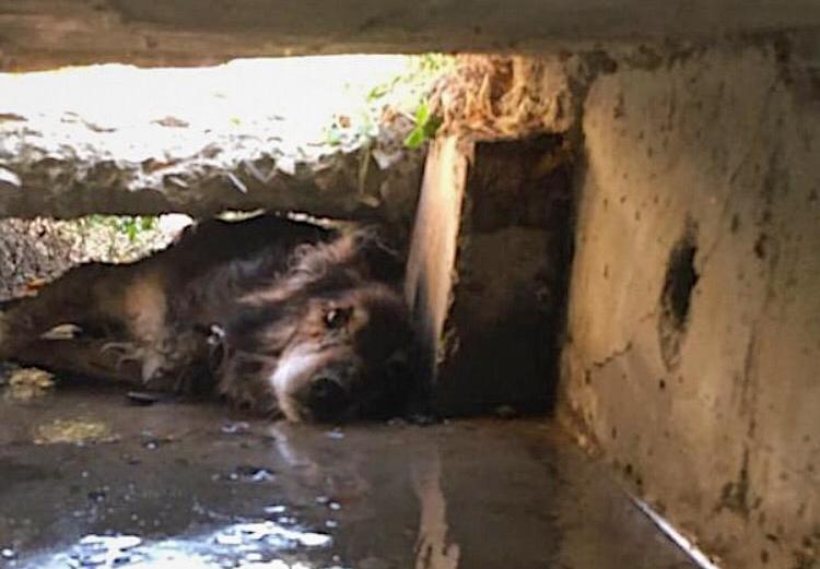 Измученного пса достали из «плена» новороссийские спасатели