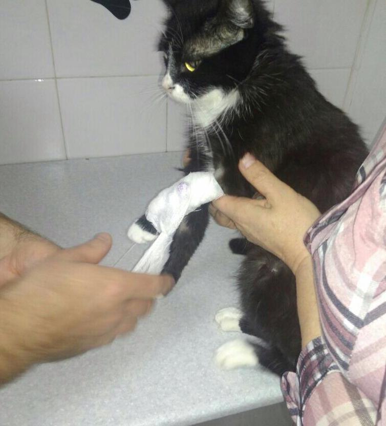 Кошка Соня нашла свою смерть в ветеринарной клинике Новороссийска «9 жизней»