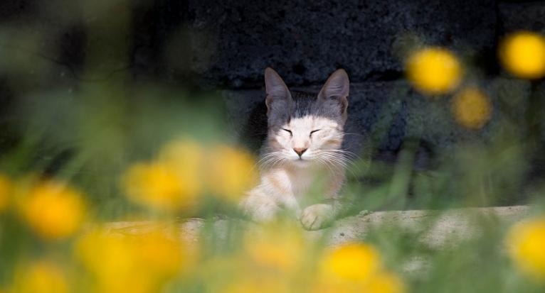 Ветер в Новороссийске понемногу стихает, а тепло остается