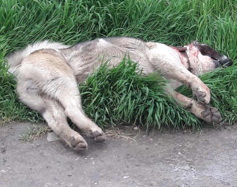 Полиции пришлось стрелять в собаку, набросившуюся на ребенка в Новороссийске