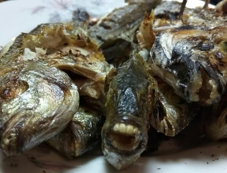 Морских карасей с человеческими зубами поймали рыбаки