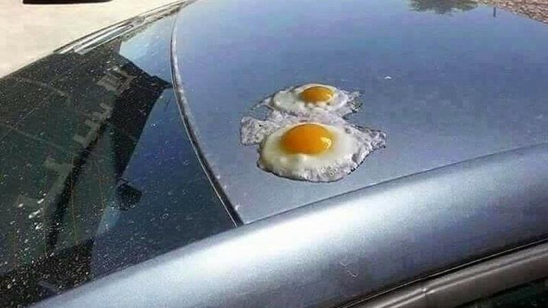 Солнце поджарило яйца новороссийца
