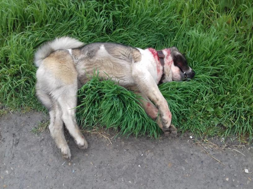 Мэр Новороссийска рассказал о состоянии ребенка, покусанного собакой